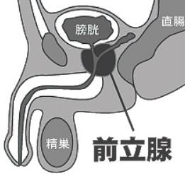 前立腺オナニーの正しいやり方とコツ